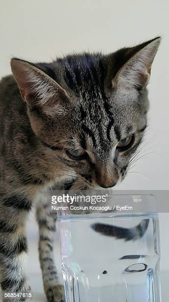 Close-Up Of Tabby Looking At Water In Drinking Glass