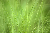 Close-up of tall grass