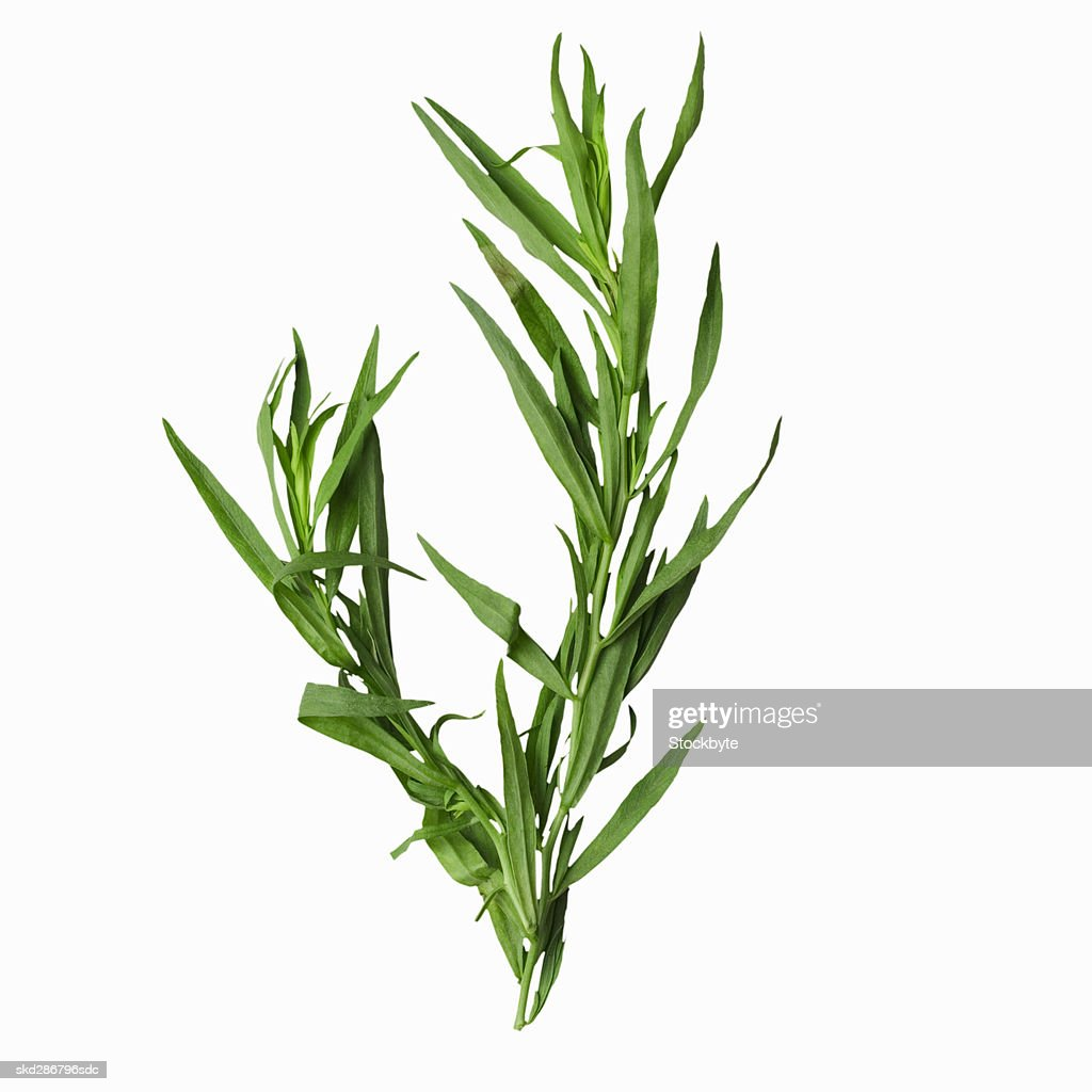 Close-up of tarragon