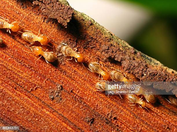 Close-Up Of Termites On Tree Trunk