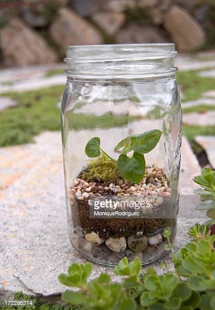 Terrarium Pot