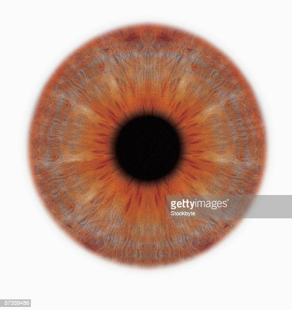 close-up of the iris of an eye