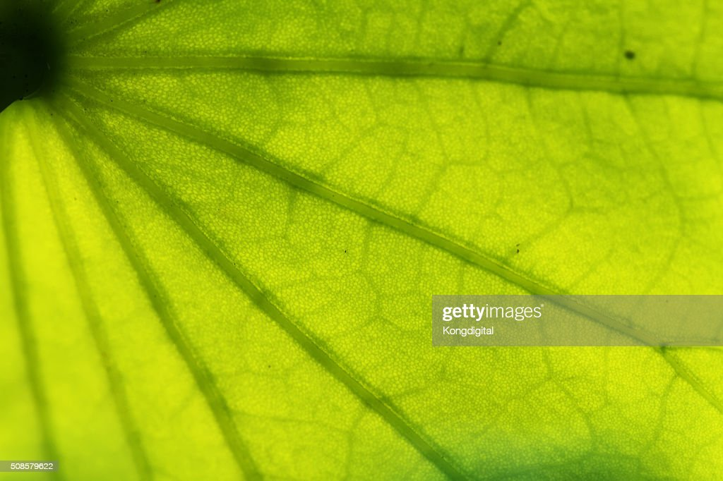 Closeup of the leaf pattern. : Bildbanksbilder