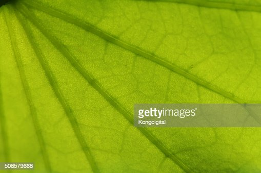 Closeup of the leaf pattern. : Stock Photo