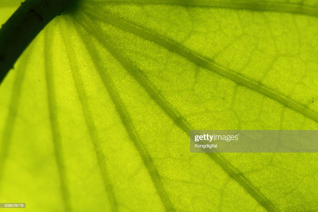 Closeup of the leaf pattern. : Stockfoto