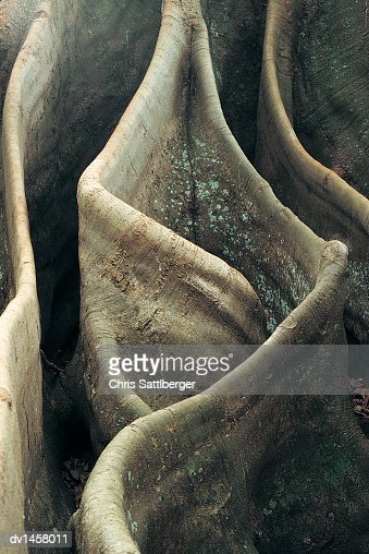 Close-up of the Rippled Roots of a Tree