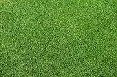 Fresh green grass, putting green
