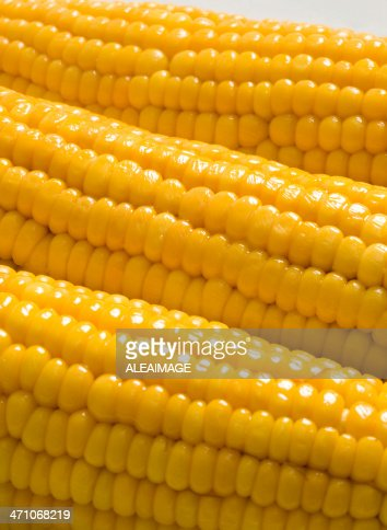Closeup of three cobs of corn in a row