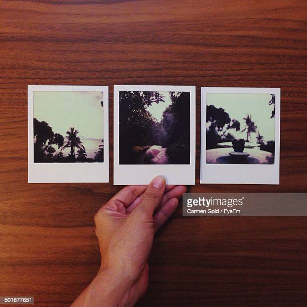 Close-up of three instant photo pictures of trees