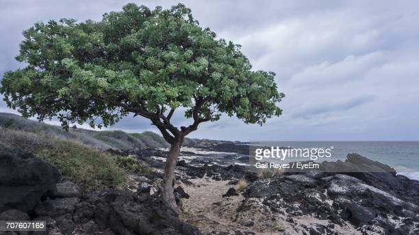 Close-Up Of Tree By Sea Against Sky