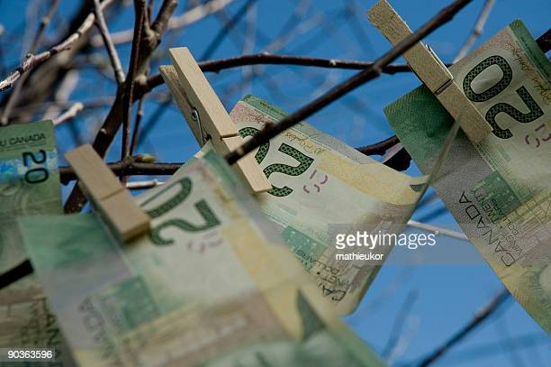 Close-up of tree limbs with twenty dollar bills clipped on