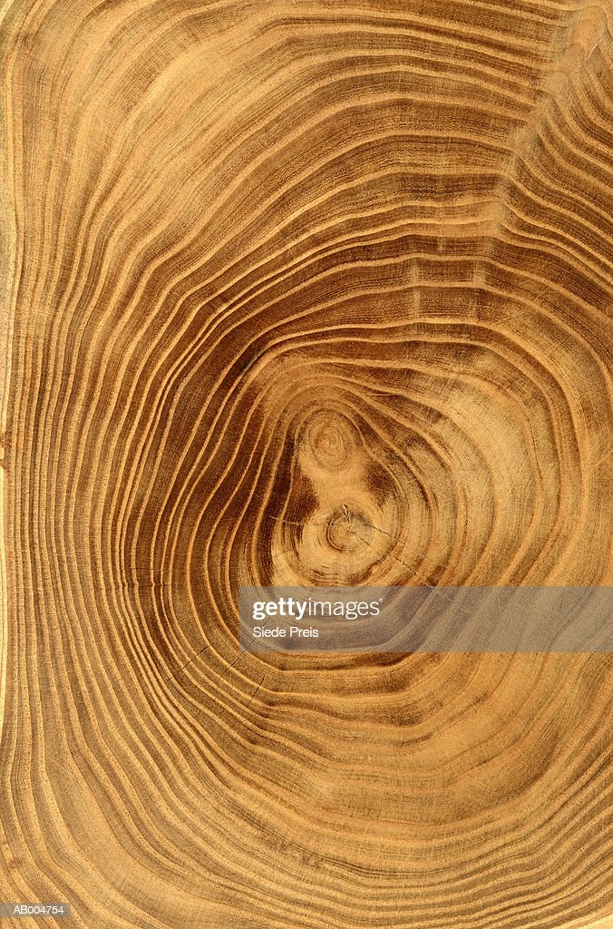 Close-Up of Tree Rings : Stock Photo