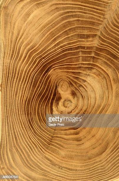 Close-Up of Tree Rings