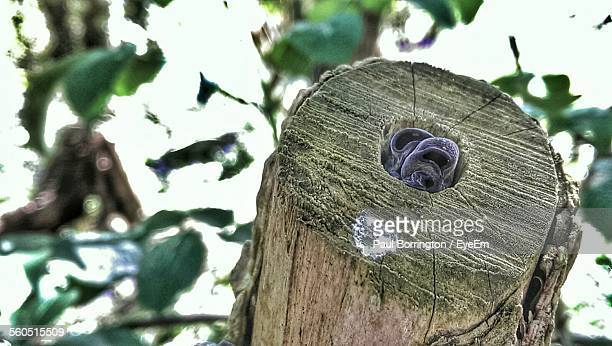 Close-Up Of Tree Stump With Jelly Ear