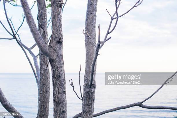 Close-Up Of Tree Trunk By Sea Against Sky