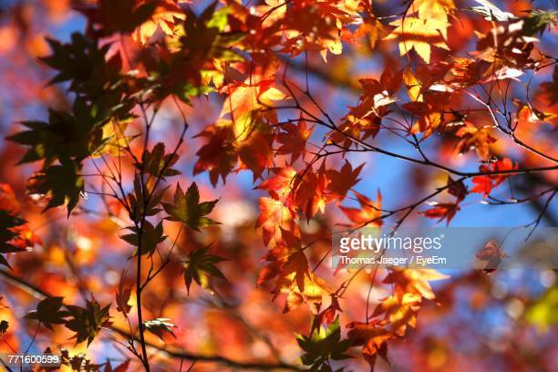 Close-Up Of Tree With Autumn Leaves