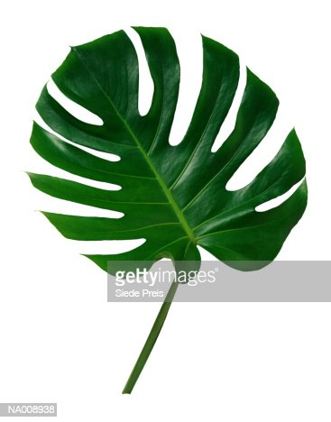 Close-Up of Tropical Leaf