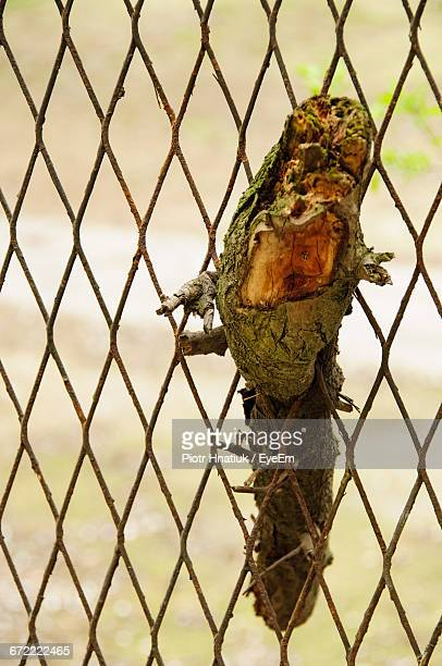 Close-Up Of Twig In Chainlink Fence