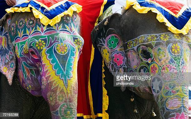 Close-up of two painted elephants, Elephant Festival, Jaipur, Rajasthan, India