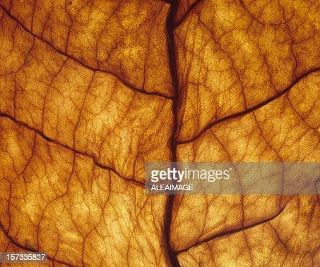 Close-up of underside of orange leaf veins