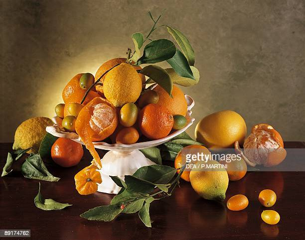 Closeup of various citrus fruits