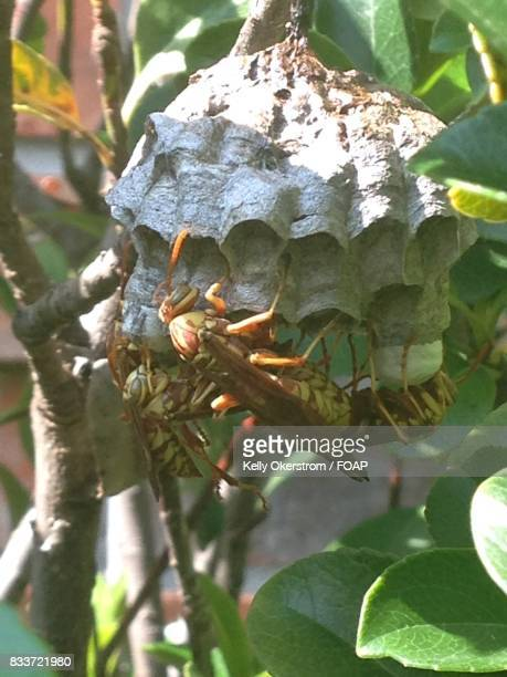 Close-up of Wasp's nest