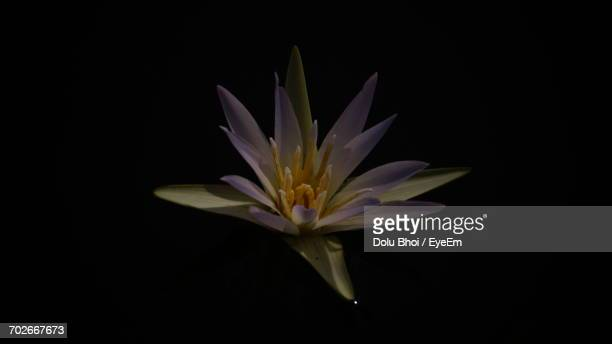 Close-Up Of Water Lily Blooming In Lake