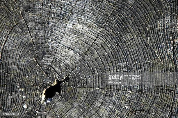 Closeup of weathered growth rings on a tree stump