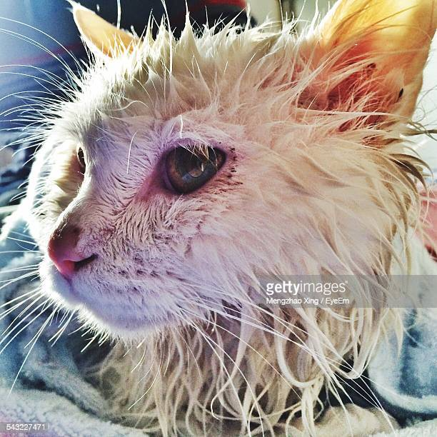 Close-Up Of Wet Cat