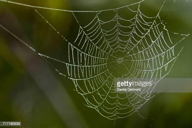 Close-up of wet cobweb, Bradenton, Florida, USA