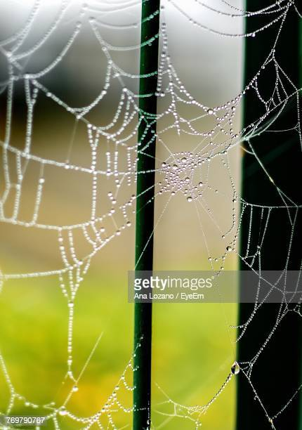Close-Up Of Wet Spider Web During Rainy Season