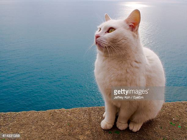 Close-Up Of White Cat On Retaining Wall