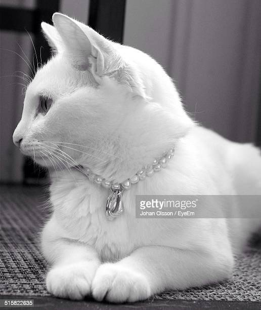 Close-up Of White Cat Sitting On Carpet At Home
