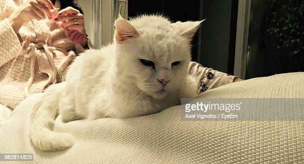 Close-Up Of White Cat With Woman Sitting On Sofa