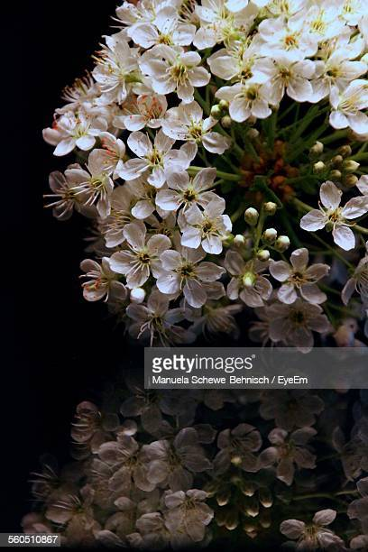 Close-Up Of White Flowers At Night