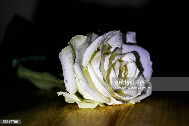 Close-Up Of White Rose On Table