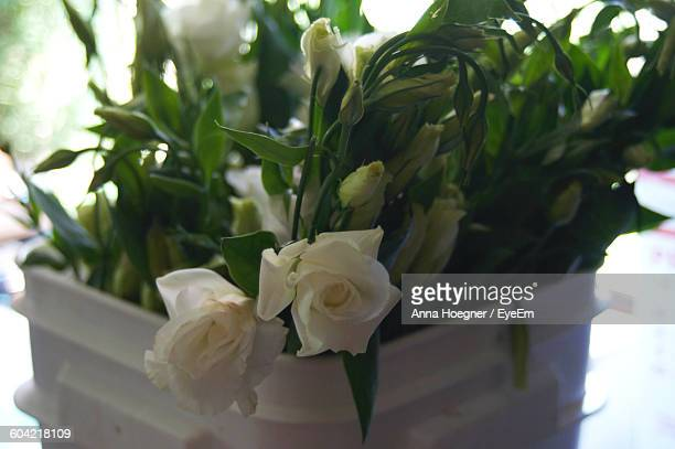 Close-Up Of White Roses Blooming In Flower Pot