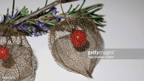 Close-Up Of Winter Cherry With Rosemary On Table