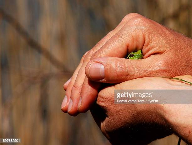 Close-Up Of Woman Hand Holding A Frog