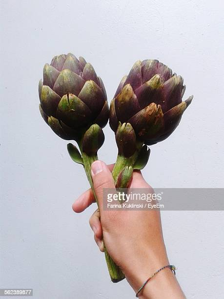 Close-Up Of Woman Hand Holding Artichokes Over White Background