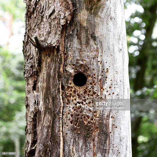 Close-Up Of Woodpecker Nest On Tree