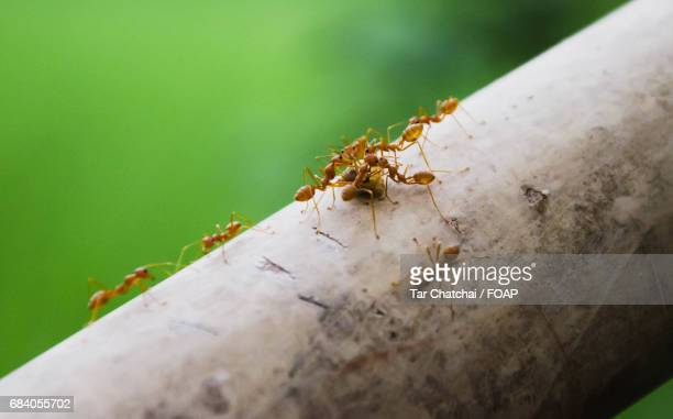 Close-up of working ants