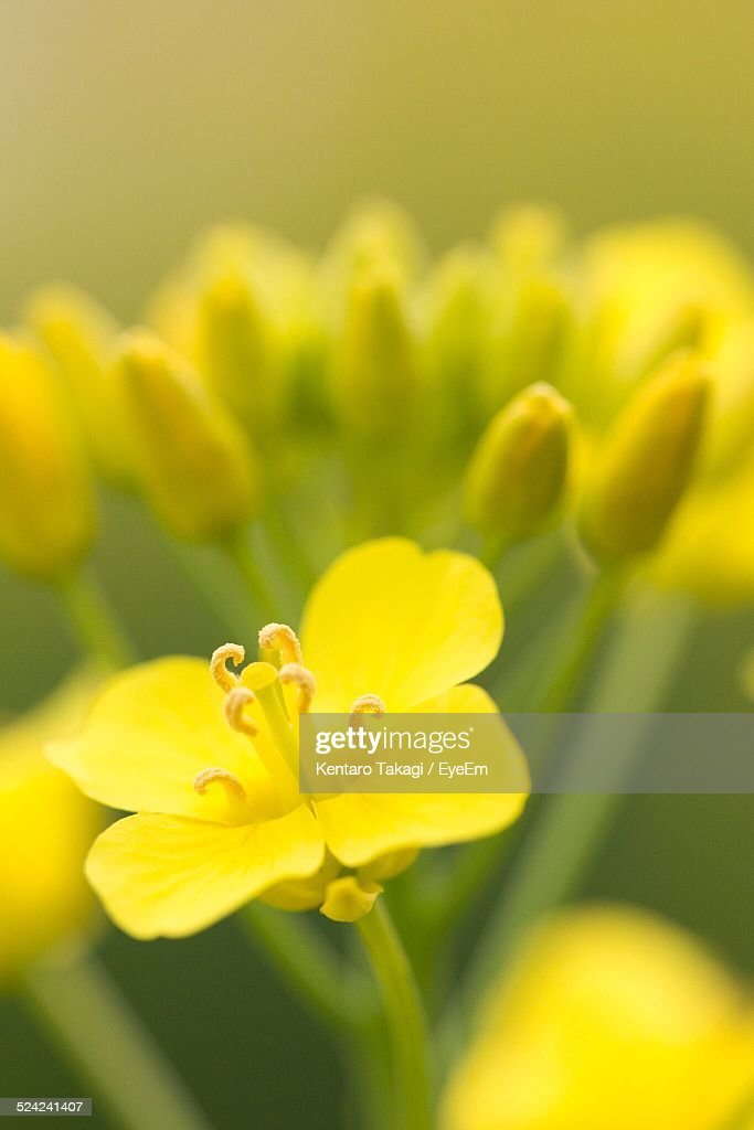 Closeup Of Yellow Flower Stock Photo Getty Images