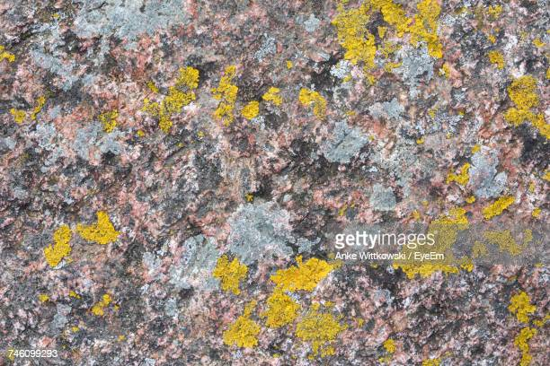 Close-Up Of Yellow Lichen On Rock