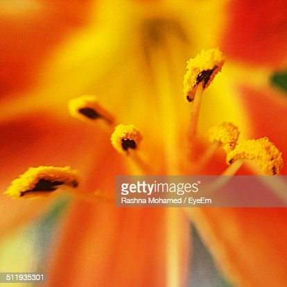 Close-up of yellow stamen of flower