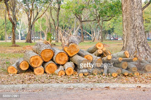 closeup pile of firewood in forest : Stock Photo