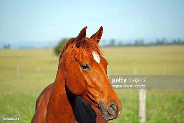 Close-Up Portrait Of A Horse On Grassland