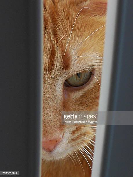 Close-Up Portrait Of Cat Behind Railing