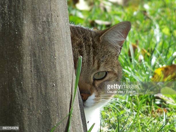 Close-Up Portrait Of Cat Behind Tree