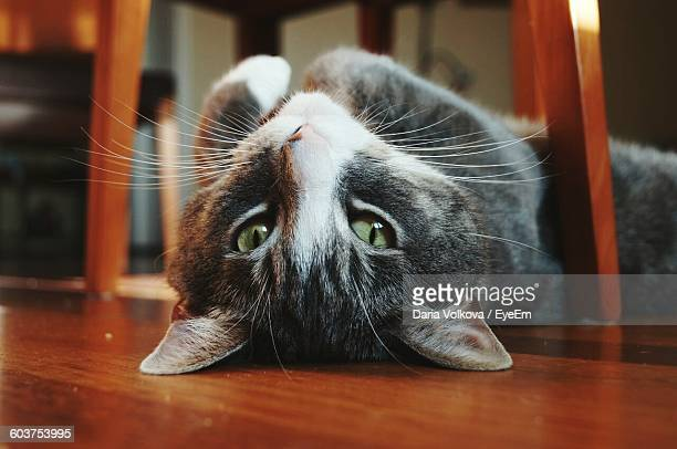 Close-Up Portrait Of Cat Lying On Floor At Home